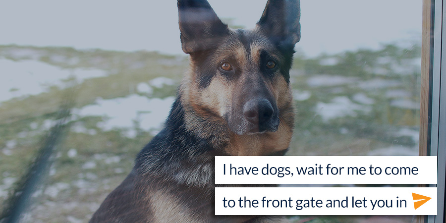 dogs-at-gate-chat